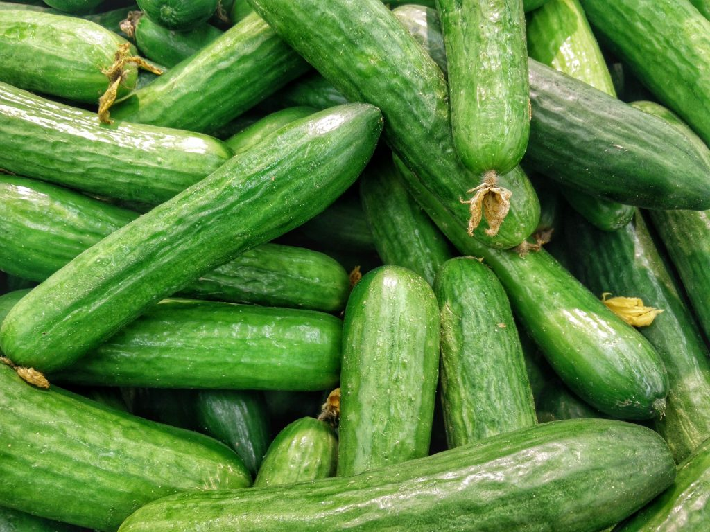 A pile of fresh, healthy-looking cucumbers